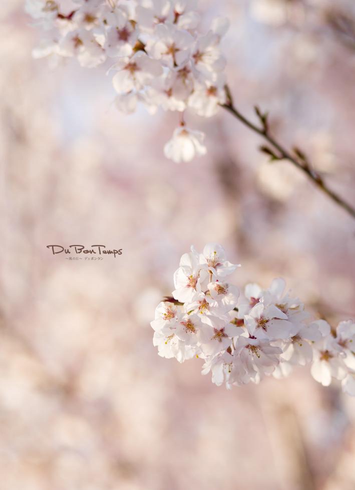 春の花咲くデュボンタン!入園おめでとう!ウェディングは、ロケ日和。